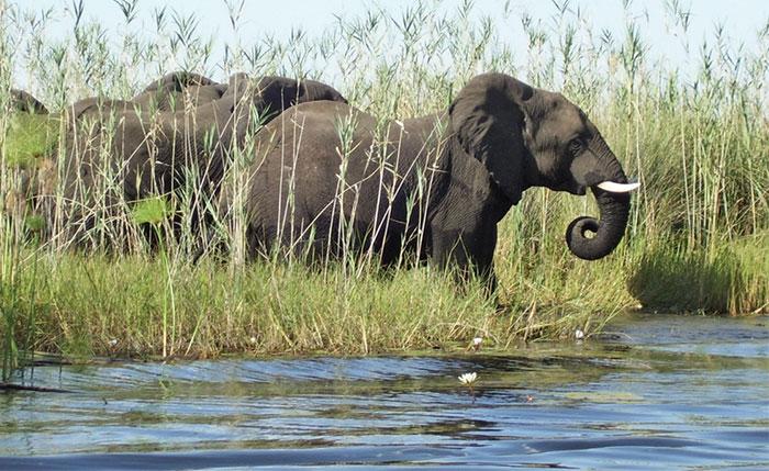 Big game hunting at Aru Hunting Safaris
