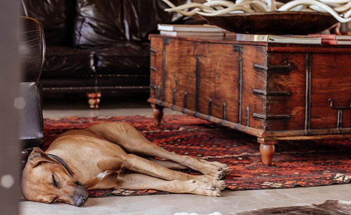 Aru Hunting Safaris is a family run establishment