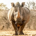 Namibian PH Says Hunting Is the Game Changer for Conservation