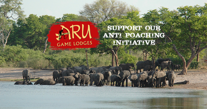 Aru takes the lead in stamping out Elephant and Rhino poaching