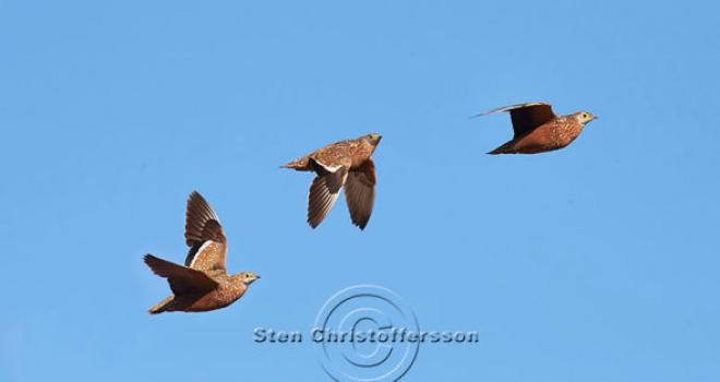 Wings over Kalahari